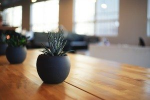 a small potted plant on a living room table